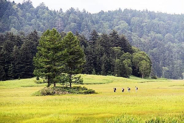 일본 오제(尾瀬)국립공원